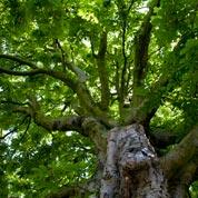 boomkruin-in-tuin_voor-site